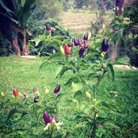 Photo taken at Hmong Hilltribe Lodge Chiang Mai by Pongnathi N. on 5/17/2013