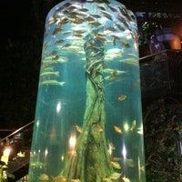 Photo taken at Aquaria KLCC by Ginger Wong on 11/13/2012
