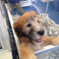 Photo taken at Pet's Delight by Arturo L. on 5/10/2014