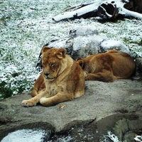 Photo taken at Calgary Zoo by Casie S. on 10/21/2012