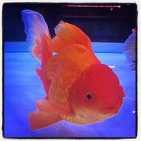 Photo taken at Qian Hu Fish Farm by Edwin Y. on 8/10/2015