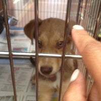Photo taken at North Shore Animal League America by Shelly-Ann D. on 4/16/2012