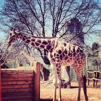 Photo taken at Denver Zoo by Gracie Z. on 4/28/2013