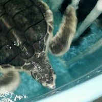 Photo taken at South Carolina Aquarium by Michael W. on 3/25/2012