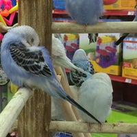 Photo taken at Petco by PF A. on 8/2/2014