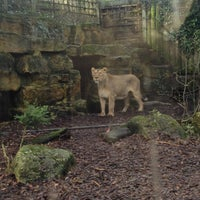 Photo taken at The Lions by David B. on 1/26/2013