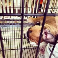 Photo taken at The Pet Corner by Joel S. on 12/6/2012