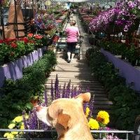 Photo taken at Nicks Garden Center & Farm Market by Abby W. on 6/8/2013