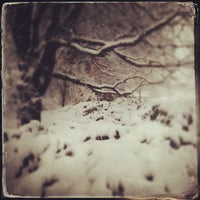 Photo taken at Highland Park Poet's Garden by T.C. P. on 2/8/2013