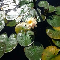 Photo taken at Monet's Garden at The New York Botanical Garden by Tudor L. on 10/20/2012