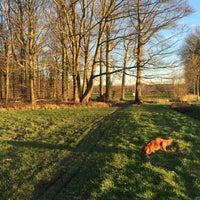 Photo taken at Nieuwenhove Bos by Jasmien W. on 3/4/2016