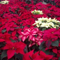 Photo taken at Exotic Flowers by Rick C. on 12/15/2012