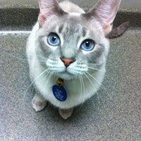 Photo taken at Animal Welfare League of Arlington by Virginialicous on 12/13/2012