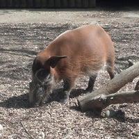 Photo taken at Sacramento Zoo by Jason P. on 3/27/2013