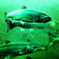 Photo taken at Hiram M. Chittenden Locks by Matthew H. on 9/15/2012