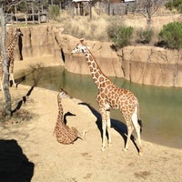 Photo taken at Dallas Zoo by Bryan M. on 1/31/2013