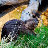 Photo taken at Rocky Mountain National Park by chris F. on 5/17/2013