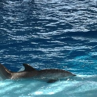 Photo taken at Dolphin Show by Juliana G. on 3/30/2013