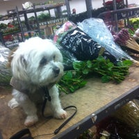 Photo taken at Dora Flora by Kimberly V. on 12/19/2014