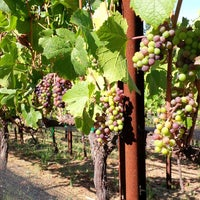 Photo taken at Regale Winery & Vineyards by Regale Winery & Vineyards on 8/11/2014