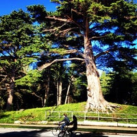 Photo taken at Golden Gate Park by Darius M. on 12/30/2012