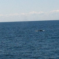 Photo taken at Boston Harbor Whale Watch by Marta d. on 7/11/2014