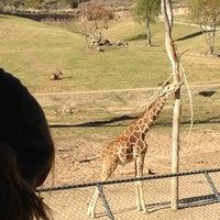 Photo taken at Safari Tram by Ryan H. on 2/5/2012