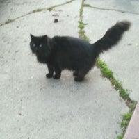 Photo taken at Black Cat Spotting by Chloe E. on 4/3/2012