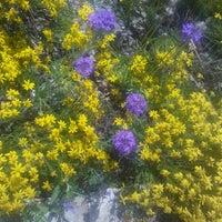 Photo taken at Lady Bird Johnson Wildflower Center by Jennifer H. on 4/8/2012