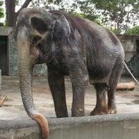 Photo taken at Inokashira Park Zoo by Ai on 8/9/2012