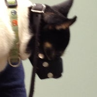 Photo taken at Mayfair Animal Clinic by Tom G. on 7/2/2012