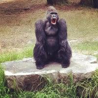 Photo taken at San Francisco Zoo by Willo O. on 8/5/2012