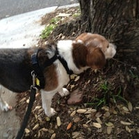 Photo taken at Buena Vista Park Dog Run by Mark H. on 2/26/2012