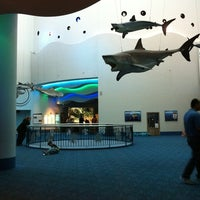 Photo taken at Moody Gardens Aquarium Pyramid by Allen A. on 3/14/2011