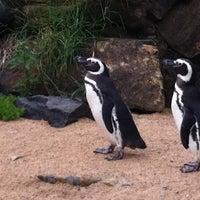 Photo taken at Gramado Zoo by Rafa A. on 2/20/2011