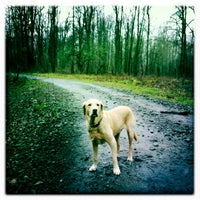Photo taken at Thousand Acres Dog Park by Sue V. on 2/8/2012