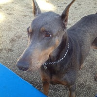 Photo taken at Recreation Park Dog Park by Chelsea on 2/17/2012