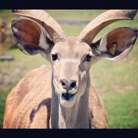 Photo taken at San Francisco Zoo by angela n. on 6/9/2012
