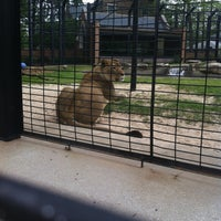 Photo taken at George H. Carroll Lion Habitat by Dallas M. on 4/5/2012