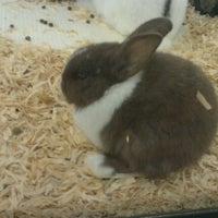 Photo taken at Pet Supermarket by Diamond_diva_23 on 5/18/2012