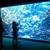 Photo taken at Maui Ocean Center, The Hawaiian Aquarium by Ryan M. on 3/9/2011