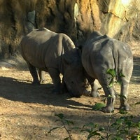 Photo taken at African Forest @ Houston Zoo by Jeremy E. on 12/11/2011