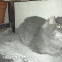 Photo taken at Catalina Island Humane Society Inc. by Airalin B. on 8/10/2012