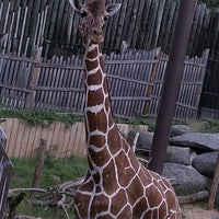 Photo taken at Maryland Zoo in Baltimore by Monica N. on 9/10/2011