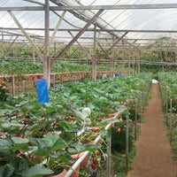 Photo taken at Big Red Strawberry Farm (Agro Tourism Garden) by Joe Y. on 12/17/2011