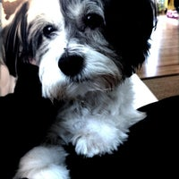 Photo taken at Le Chien Fortune Dog Grooming Spa by Jackie P. on 8/16/2011