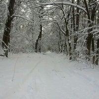 Photo taken at Ліс by Воспитанный on 2/7/2012
