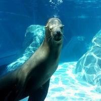 Photo taken at Saint Louis Zoo by ★Werdna☆ ☆. on 7/23/2012