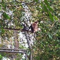 Photo taken at Zoo Taiping & Night Safari by Mohd Ekram H. on 1/7/2012