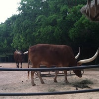 Photo taken at Ankole Cattle Exhibit by Christina on 4/23/2011